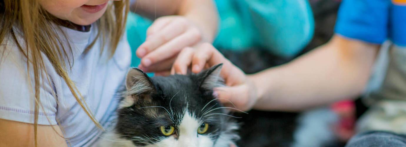 allergie chat traitement