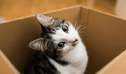 déménagement chat